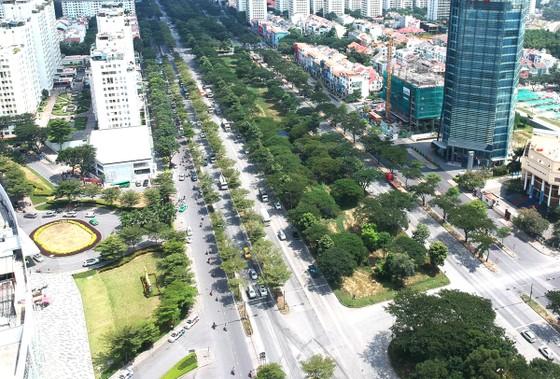 Nhiều vướng mắc trong quản lý cây xanh đô thị ảnh 1