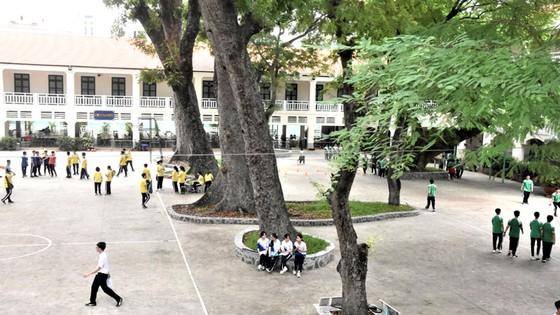 Tìm giải pháp tối ưu quản lý cây xanh trong trường học ảnh 1