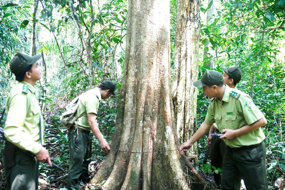 Từ chiến khu đến chiến khu - Bài 4: Ba thế hệ đảng viên cùng giữ rừng ảnh 1