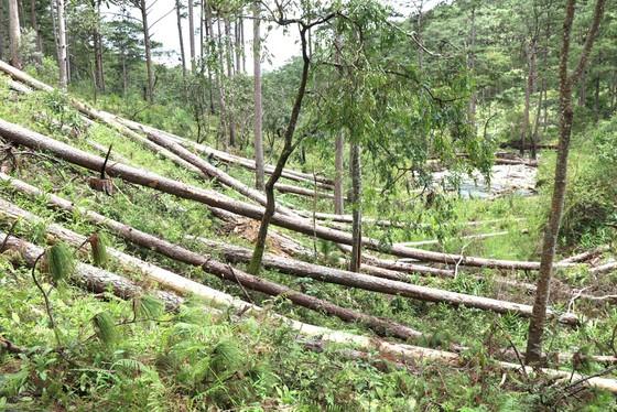 Muôn kiểu phá rừng - Bài 3: Nhùng nhằng chuyển giao dự án ảnh 1