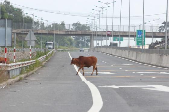 Cao tốc Đà Nẵng – Quảng Ngãi tiếp tục hư hỏng ảnh 4