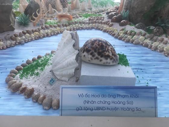Những vỏ ốc từ quần đảo Hoàng Sa – Trường Sa giữa lòng Đà Nẵng ảnh 7