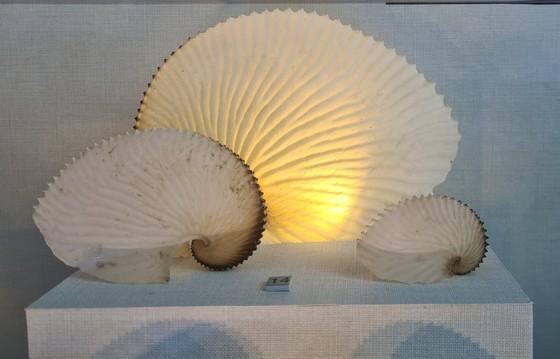 Những vỏ ốc từ quần đảo Hoàng Sa – Trường Sa giữa lòng Đà Nẵng ảnh 3