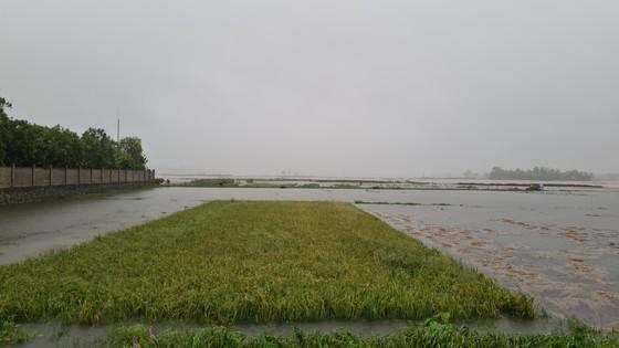 Nhiều nơi tại Quảng Nam bị ngập cục bộ do ảnh hưởng bão số 5 ảnh 4