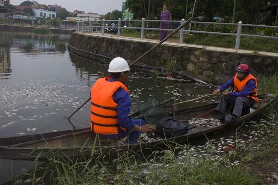 Hàng tấn cá chết bất thường bốc mùi hôi thối nổi đầy hồ Đại An ảnh 1