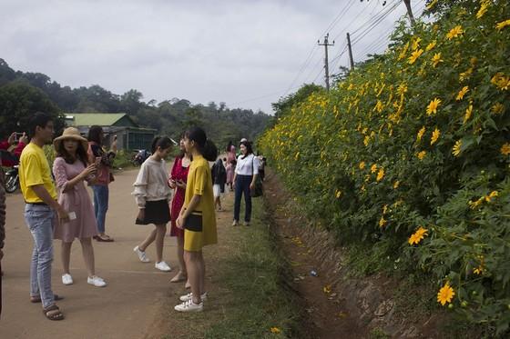 Độc đáo đường hoa dã quỳ nơi miền tây Quảng Trị ảnh 2