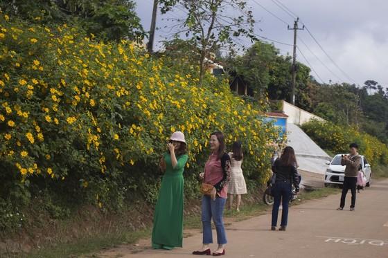 Độc đáo đường hoa dã quỳ nơi miền tây Quảng Trị ảnh 5