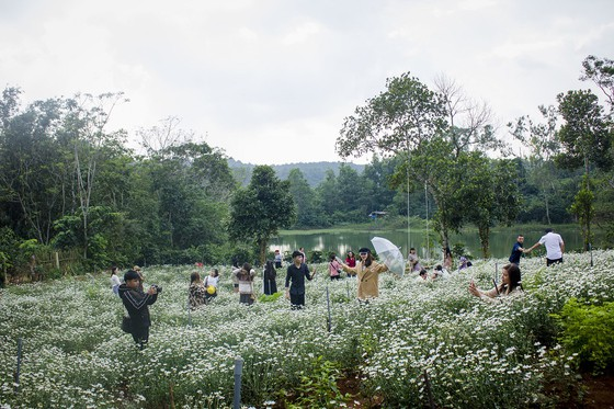 Độc đáo đường hoa dã quỳ nơi miền tây Quảng Trị ảnh 6