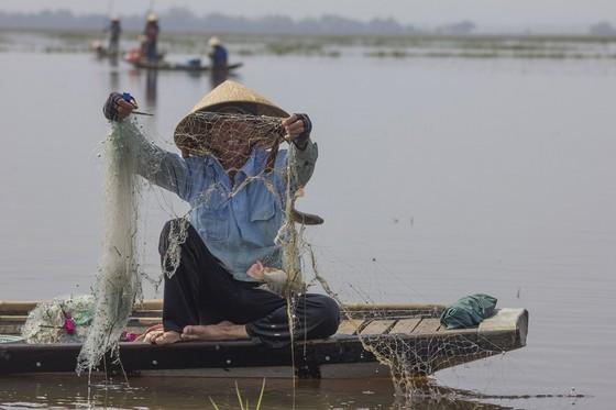 Mưu sinh vùng càng mùa nước nổi ảnh 5