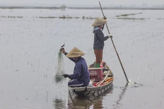 Mưu sinh vùng càng mùa nước nổi ảnh 4