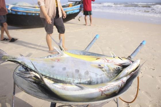 Ngư dân được mùa cá bè xước những ngày giáp tết ảnh 4