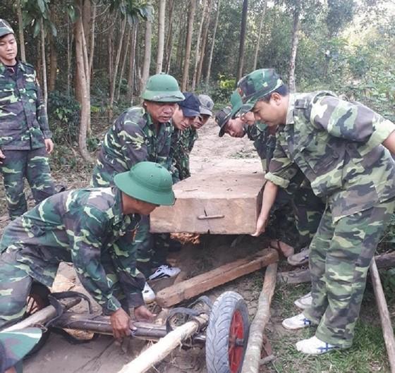 Phát hiện, thu giữ nhiều khối gỗ lậu được cất giấu trong rừng sâu ở Quảng Trị ảnh 1