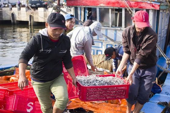 Ngư dân Quảng Trị được mùa cá cơm sau Tết Nguyên đán ảnh 2