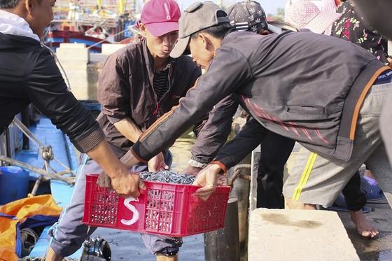 Ngư dân Quảng Trị được mùa cá cơm sau Tết Nguyên đán ảnh 4