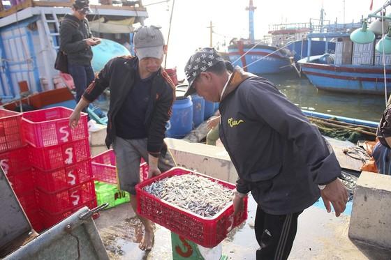 Ngư dân Quảng Trị được mùa cá cơm sau Tết Nguyên đán ảnh 5