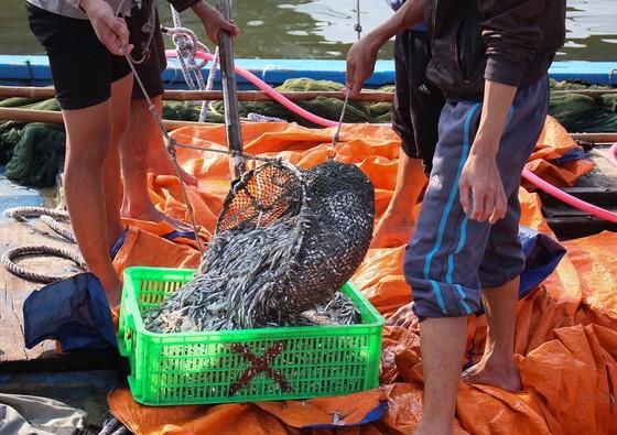 Ngư dân Quảng Trị được mùa cá cơm sau Tết Nguyên đán ảnh 7