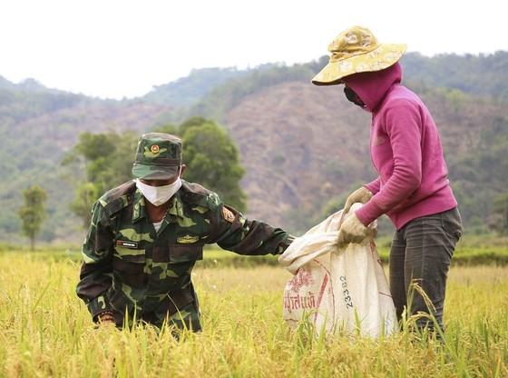 Tranh thủ nắng ráo nông dân tất bật thu hoạch lúa bị ngã đổ ảnh 6