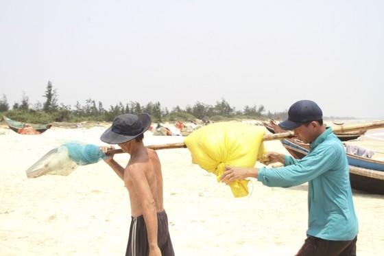 Ngư dân vùng bãi ngang Quảng Trị được mùa ốc ruốc ảnh 11