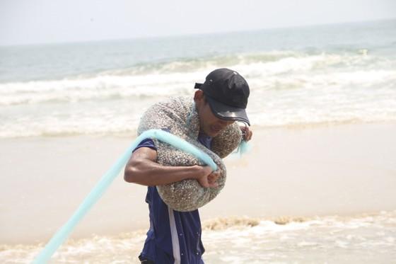 Ngư dân vùng bãi ngang Quảng Trị được mùa ốc ruốc ảnh 5
