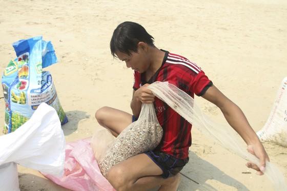 Ngư dân vùng bãi ngang Quảng Trị được mùa ốc ruốc ảnh 8