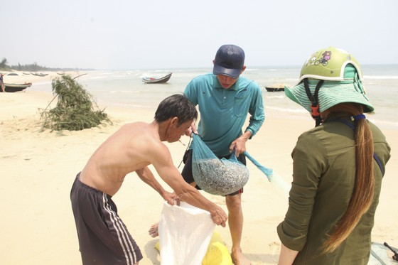 Ngư dân vùng bãi ngang Quảng Trị được mùa ốc ruốc ảnh 9