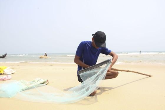 Ngư dân vùng bãi ngang Quảng Trị được mùa ốc ruốc ảnh 1