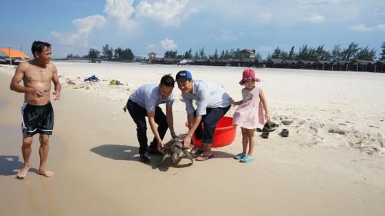 Quảng Trị: Cứu hộ và thả một cá thể rùa quý hiếm về biển ảnh 1