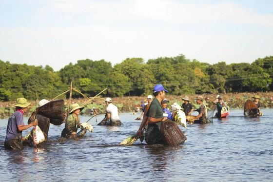 Hàng trăm người reo hò, lội bùn bắt cá cầu may  ảnh 1