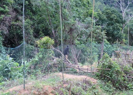 Căng lưới vây núi ngăn đàn voọc tấn công người ảnh 4