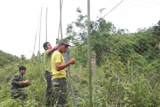 Căng lưới vây núi ngăn đàn voọc tấn công người ảnh 5