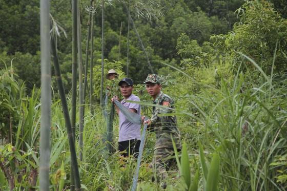 Căng lưới vây núi ngăn đàn voọc tấn công người ảnh 2