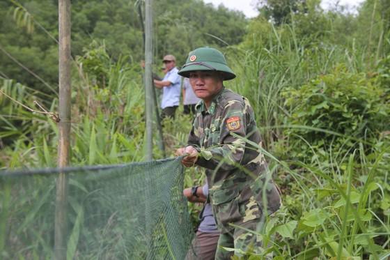 Căng lưới vây núi ngăn đàn voọc tấn công người ảnh 1