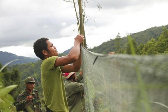 Căng lưới vây núi ngăn đàn voọc tấn công người ảnh 6