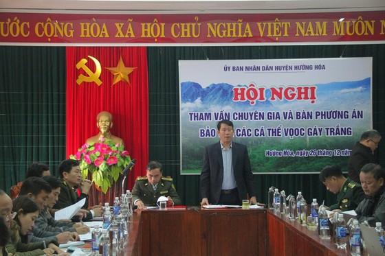 Voọc gáy trắng tấn công người ở Quảng Trị: Di chuyển đàn voọc về khu vực mới ảnh 1