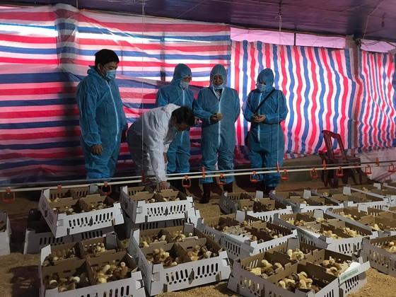 Bộ NN-PTNT thăm hỏi, tặng quà các gia đình khó khăn trên địa bàn tỉnh Quảng Trị  ảnh 1