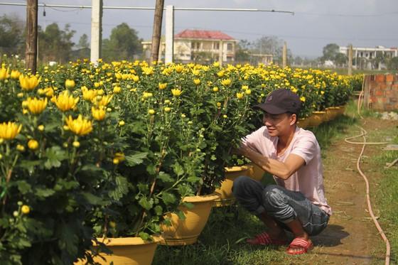 Làng hoa An Lạc hối hả vào vụ tết ảnh 3