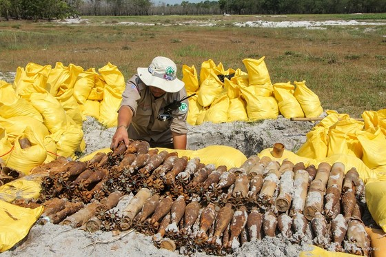 Phát hiện hầm chứa gần 500 quả đạn cối, lựu đạn trong rừng keo ảnh 2
