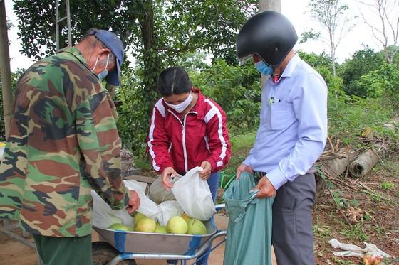 Nông dân Quảng Trị tìm đầu ra cho trái cam ảnh 4
