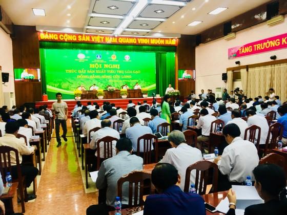 ĐBSCL tìm giải pháp tiêu thụ lúa hàng hóa cho nông dân ảnh 1
