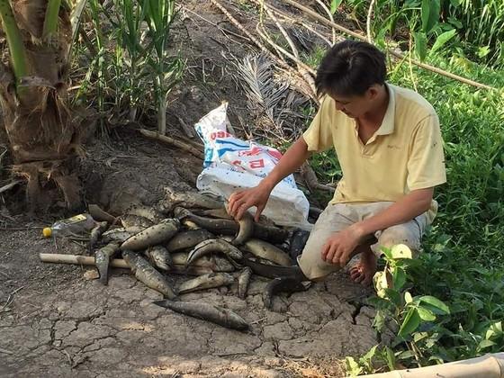 Đã xác định được nguyên nhân khiến nguồn nước sông Cái Lớn tại Hậu Giang bị ô nhiễm ảnh 3