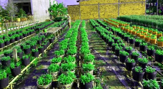 Trái cây tạo hình, hoa kiểng chuẩn bị ra phố chợ ở miền Tây ảnh 3