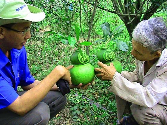 Trái cây tạo hình, hoa kiểng chuẩn bị ra phố chợ ở miền Tây ảnh 2