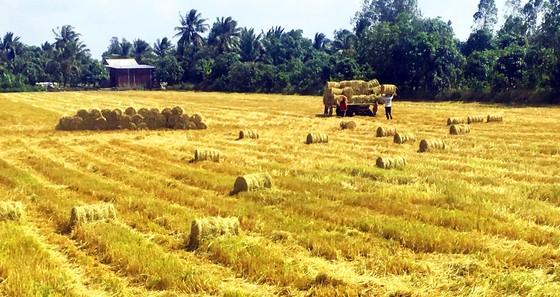 Kiến nghị thông quan gạo nằm tại cảng ảnh 1