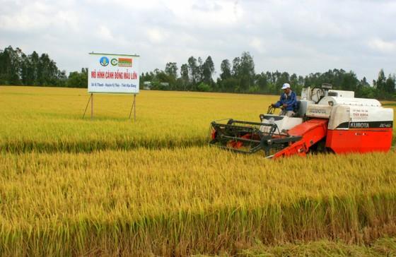 Kiến nghị thông quan gạo nằm tại cảng ảnh 2