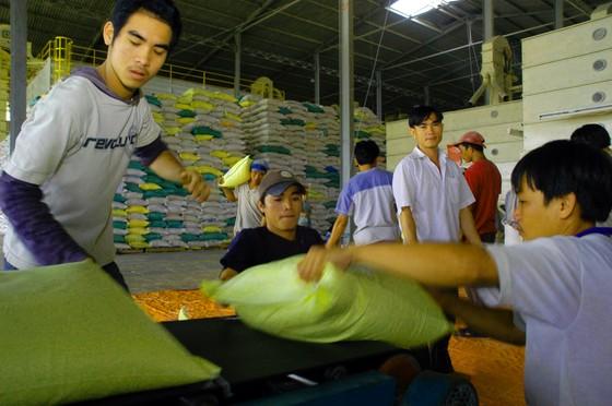 ĐBSCL – lúa gạo cùng tăng giá vào cuối vụ ảnh 2