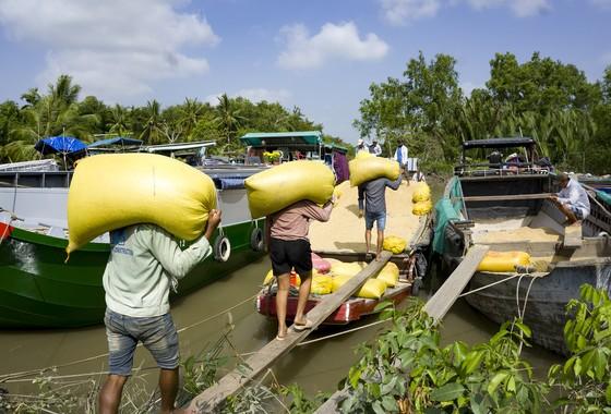 Giảm diện tích sản xuất lúa, nông dân ĐBSCL vẫn có lợi  ảnh 2