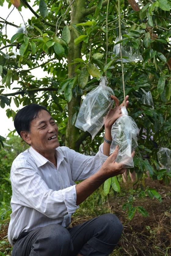 ĐBSCL: Gần 40.000ha cây ăn trái có nguy cơ thiếu nước tưới ảnh 2