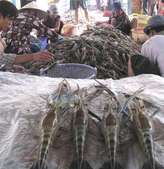 Xuất khẩu tôm và cá tra đang phục hồi, bứt phá ở thị trường Mỹ ảnh 1