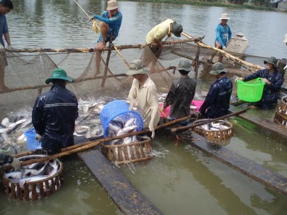 Xuất khẩu tôm và cá tra đang phục hồi, bứt phá ở thị trường Mỹ ảnh 2