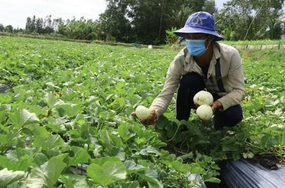 Hậu Giang: Nỗ lực kết nối đầu ra cho nhiều nông sản ảnh 2